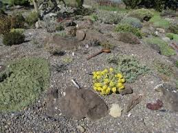 Simple Rock Garden Tips For A Simple Design Of Rock Gardens