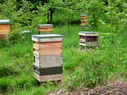 artificial swarm tales from the beehive a beekeepers blog