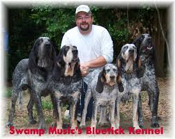 bluetick coonhound in florida swamp music u0027s bluetick kennels biggamehoundsmen com