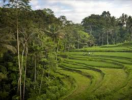 como shambhala estate bali natural surroundings views of rice