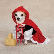 Small Dog Halloween Costumes Images Small Dog Halloween Costumes 72 Dog Halloween