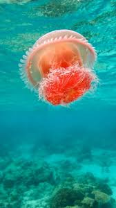ocean explore wallpapers wonderful undersea ocean beautiful jellyfish iphone 6 plus