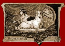afghan hound mandarin talisman silken windhound litters pages
