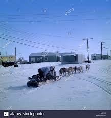 eskimo inuit husky dog transport travel snow ice arctic polar