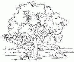how to draw an apple tree roadrunnersae