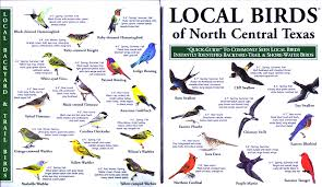 Texas birds images Local birds quick guides to nature science jpg