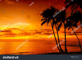 Sunset Orange by Golden Tropical Sunset Silhouette Palm Trees Stock Photo 415467814