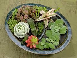 Dish Garden Ideas Dish Gardens Ashleys Florist And Antiques Dish Gardens Dish