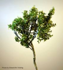 how to make model trees for model railroads models model
