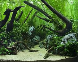 Planted Aquarium Aquascaping 144 Best Aquarium Images On Pinterest Aquarium Fish Aquarium