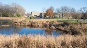 native water plants stormwater retention ponds for wildlife lake and wetland ecosystems