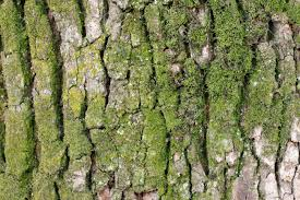 moss on tree bark stock photo picture and royalty free image