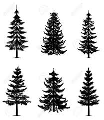best 25 evergreen ideas on tree tattoos