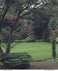 a bold border of trees and shrubs gardening