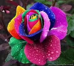 best 25 beautiful roses ideas on roses beautiful
