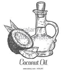 coconut sketch stock photos u0026 coconut sketch stock images alamy