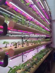 hydroponic led grow lights image result for growing herbs with strip grow lights setup