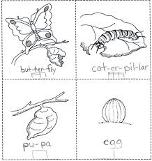 coloring page butterfly monarch monarch butterfly life cycle coloring page coloring page butterfly