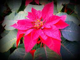sydney native plants beautiful flowers and plants u2013 nutsaboutplants