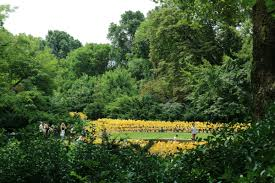 Prospect Park Botanical Garden Suchi Reddy Designs 7 000 Pinwheel Installation For Prospect Park