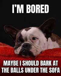 Bored Meme - 12 epic and hilarious dog memes to make you smile barking laughs
