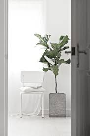 Inside Home Plants by 29 Best Ficus Images On Pinterest Plants Ficus Elastica And