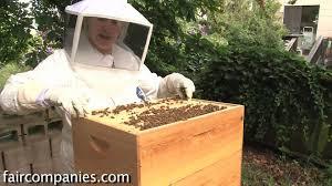 the magic of urban beekeeping a backyard san francisco hive youtube