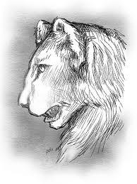 lioness sketch sketches