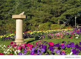 garden of flowers dunneiv org