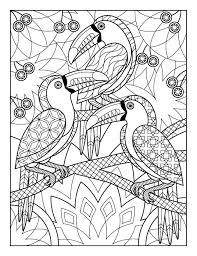 206 best coloring parrot images on pinterest parrots coloring