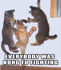 Kung Fu Meme - everybody was kung fu fighting viral viral videos