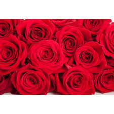 valentines day roses 12 dozen s day roses 144 roses flower muse
