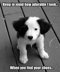 Border Collie Meme - puppy border collie meme border collies pinterest collie