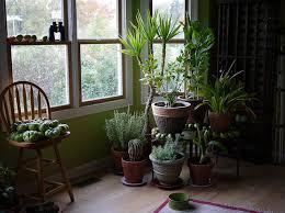plants that grow in dark rooms five best houseplants for beginners greg tilley modular homes