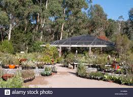australian native plants nursery kuranga native nursery at mt evelyn in the yarra valley victoria