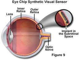 What Structure Of The Eye Focuses Light On The Retina The Physics Of Light And Color Human Vision And Color Perception