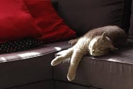 sur canapé sur canapé en plein rêve sur mignon com