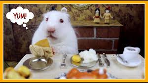 hamster eats thanksgiving dinner