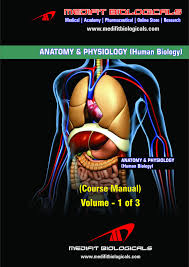 What Is Human Anatomy And Physiology 1 Medifit Biologicals Anatomy U0026 Physiology Human Biology