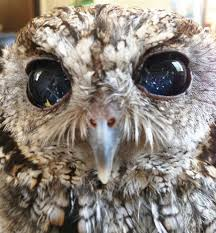 Blind Owl Band Meet Zeus The Rescued Blind Owl With Eyes Like The Starry Night Sky