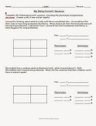 big bang theory punnett square worksheet llc middle