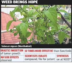 herbal compound promises cure for liver cancer the hindu