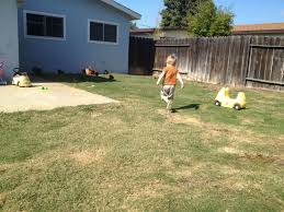 what kind of dog should i get for my backyard backyard chickens