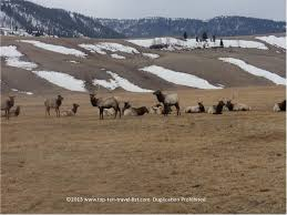 Wyoming top travel blogs images Attraction of the week the national elk refuge in jackson hole jpg