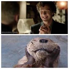 Cumberbatch Otter Meme - they are still funny those otter memes benedict cumberbatch