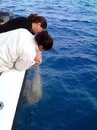 scattering ashes at sea burial at sea san diego burial at sea san diego services