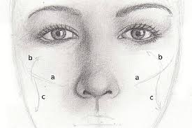 drawing lesson for beginner artists proportions of the face