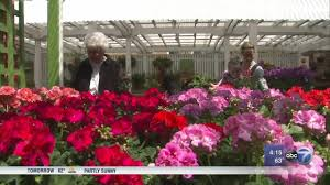 refresh your indoor space for spring abc7chicago com