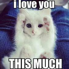 But I Love You Meme - i love you meme for her