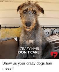 Your Crazy Meme - pics esmemes com crazy hair dont care show us your